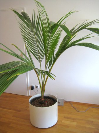 Identify this house plant - Miscellaneous - Toytown Germany
