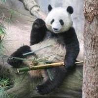 TT_PandaMunich_logo.jpg.8360b3e29f94e367