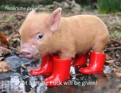 mini-pigs.jpg