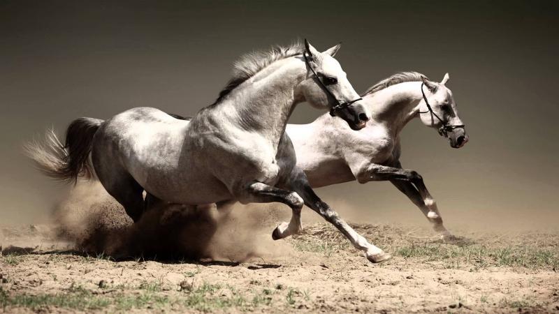 Horse.jpg.0ef6df4dc470247cd952751244b6c9