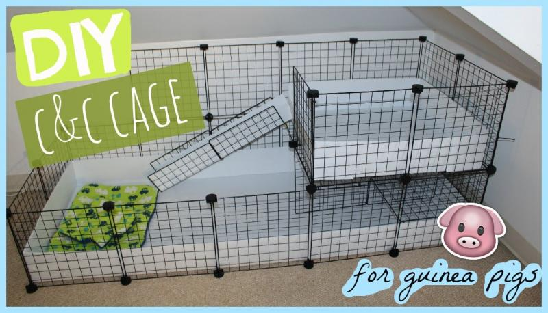 candc cavy cage.jpg