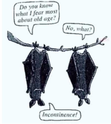 incontinence.jpg.3b3ba4475ea64db5520d732