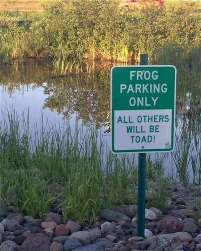 frog.jpg.6b4caee57e01173ae07267250d35fe9