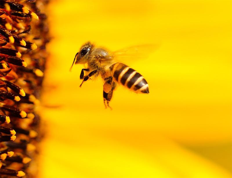 Save-The-Bees-4.jpg