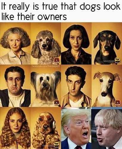 5df601a0900fb_dogsowners.jpg.4c563b34f60