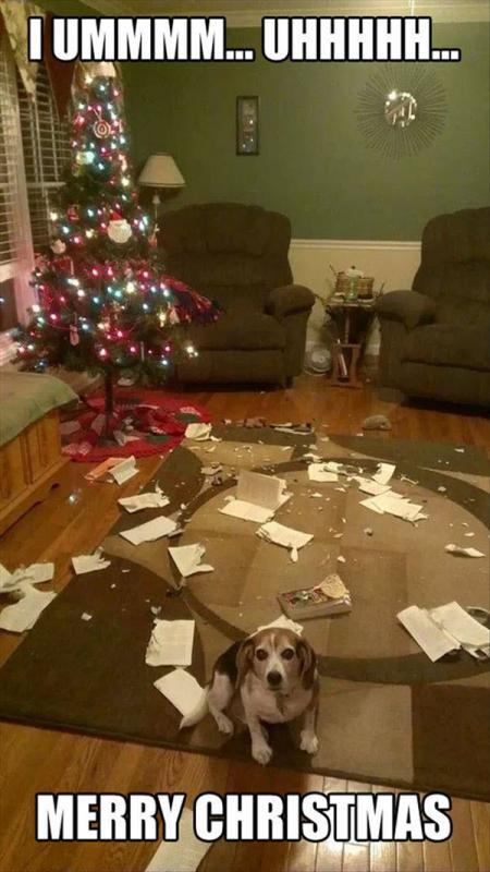 funny-merry-christmas-disaster-dog-memes.jpg