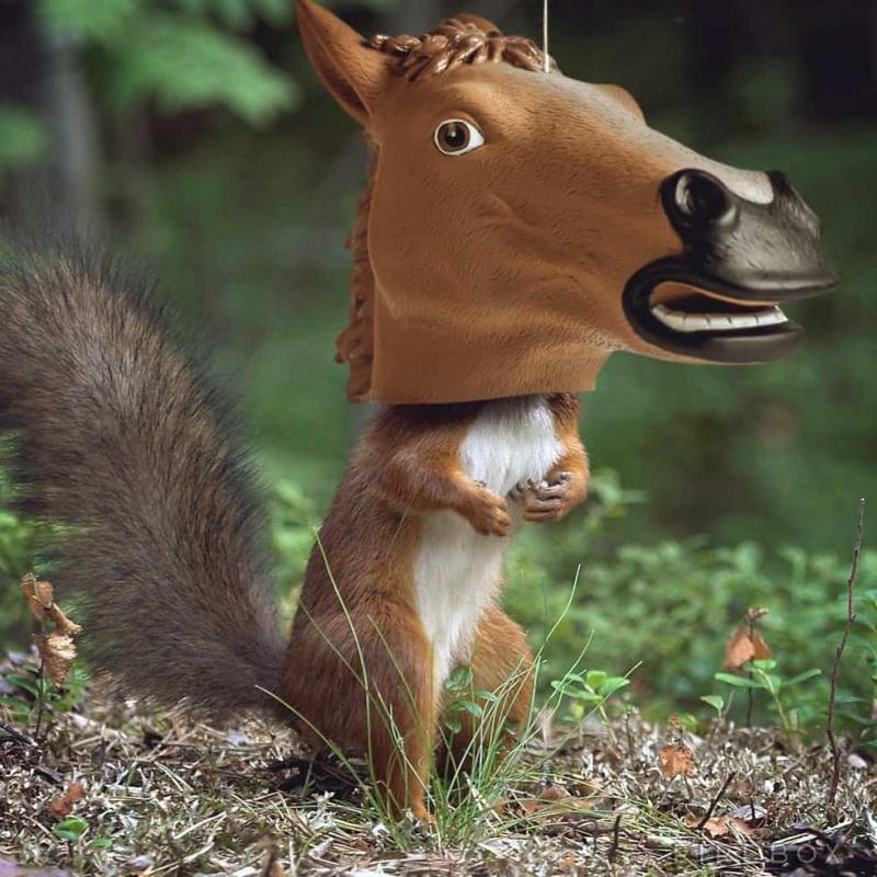 5e29d441b71ec_squirrelindisguise.jpg.958