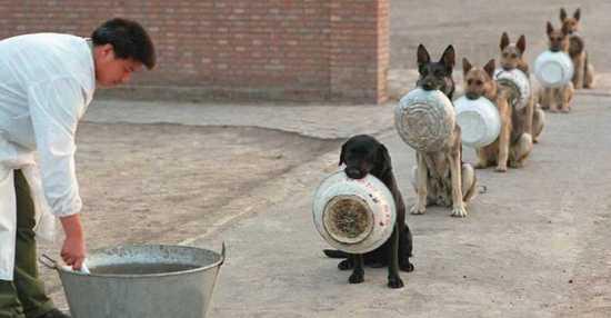 5e7e070e16630_policedogs.jpg.957261af117
