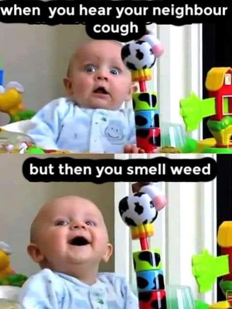 smellweed.jpg.e2671a7d825ecb0aec5eb44343
