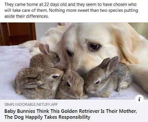 bunnies.jpg.8969a3a6668c188183907819d546
