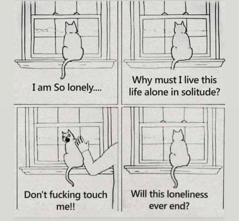 lonelycat.jpg.5755d5448c0dcbd359db9bfe3b