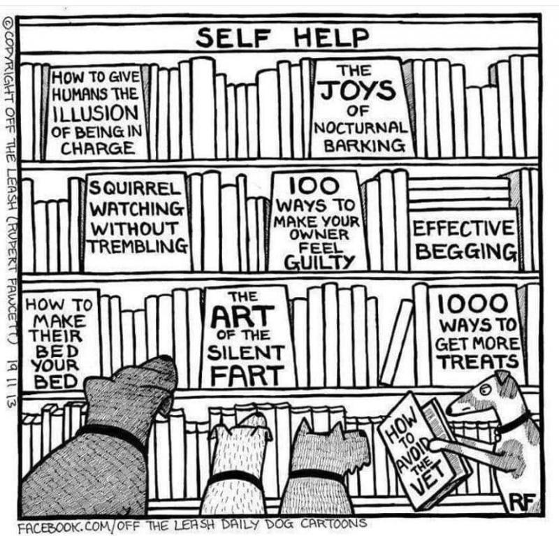 dog_self_help.jpg.99c4b26efce6fabe634e1a