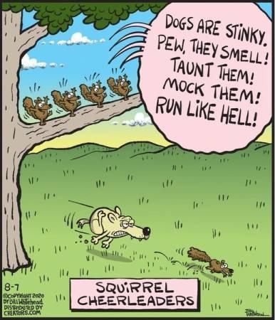squirrels.jpg.48a8121596e3d25acf91971ae7