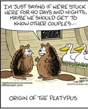 platypus.jpg.9b75259c244ddbbfe46b311490c