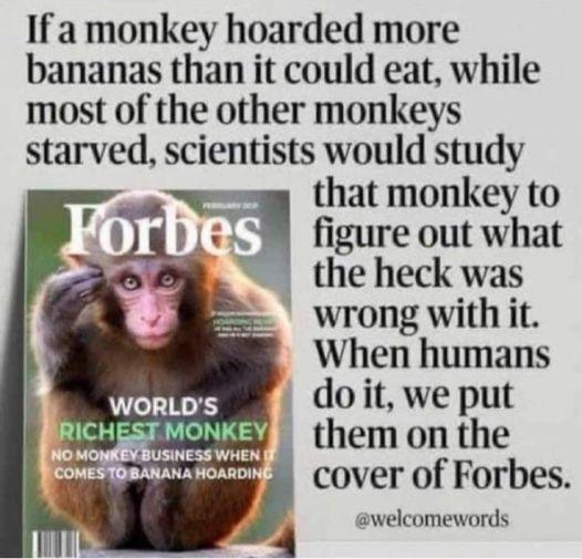 monkey.jpg.ea948c591021011d25f4fe7b7a4cb