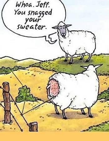 sweater.jpg.f4816e6236d1525398d262291995