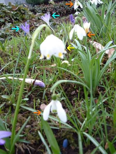 Can you name these spring flowers life in munich toytown germany share this post mightylinksfo